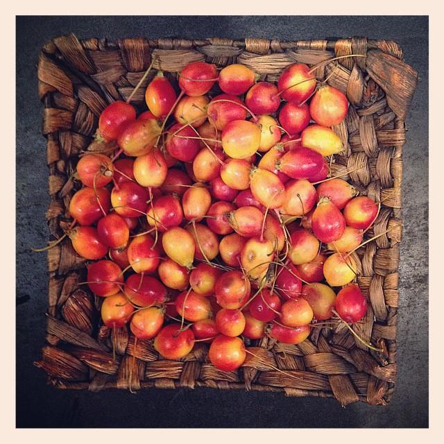 #ヒメリンゴ