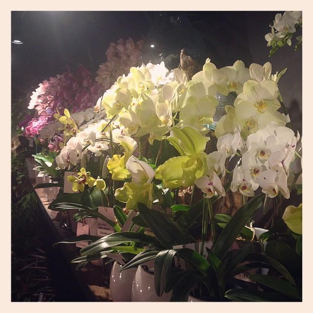 二階にはたくさんの蘭も並んでいます。ご来店の際はぜひ二階も覗いてみて下さい