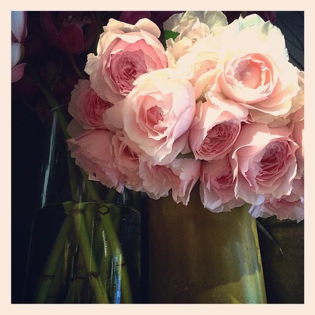 エトル ファシネ日本が産出した品種の国産のバラです。菊などの和花と合わせてお正月のお花に
