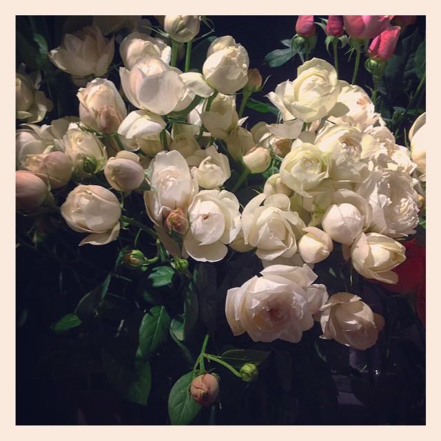 赤いバラもいいですが、白いバラもさりげなくて素敵です。香りも良い、バラのフェアビアンカ。つぼみがほのかにピンクなのもポイントです️