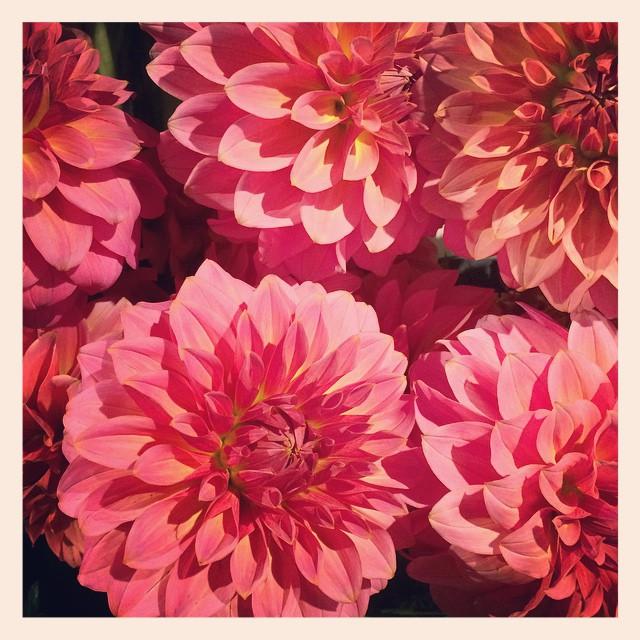 お正月用のお花も、いつも通りのかわいいお花も、たくさん並んでます!お飾りやお花、飾るのは本日がラストチャンスですぜひお買い物帰りにでも覗いてみてください