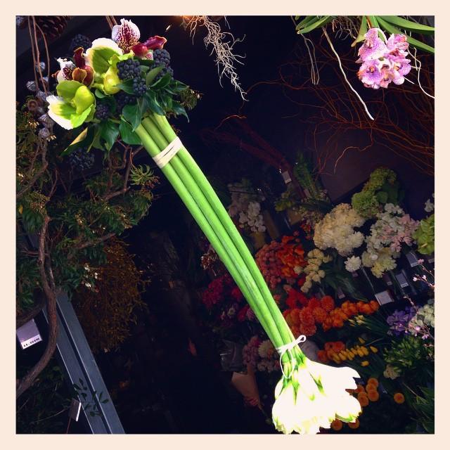 おはようございます。#アマリリス にいけた #パフィオが、入口でお出迎えしております!本日も23時まで営業しております。