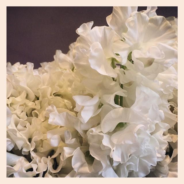香りの良いスイートピー。ヒラヒラとした花びらがゴージャス!