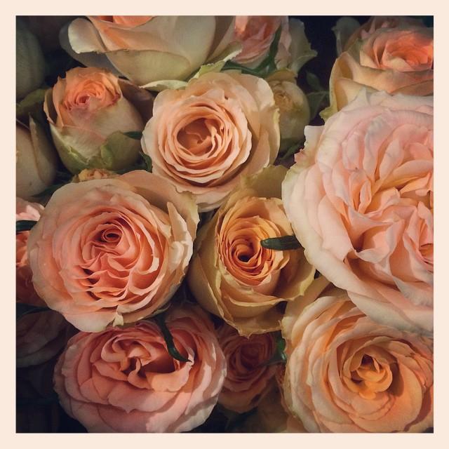 """スプレーバラ""""コルデスファンタジー""""バラが旬な季節。素敵なバラがたくさん入荷しています"""
