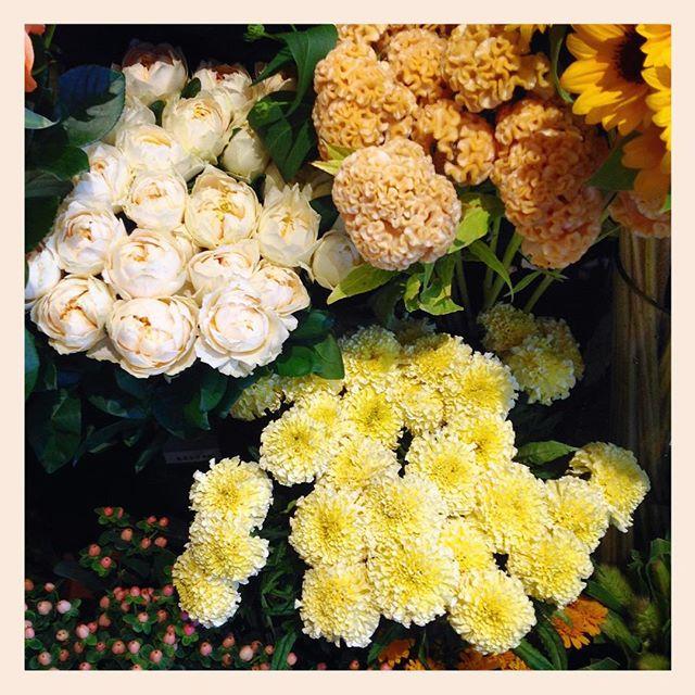 優しいクリーム色や黄色のお花は心が和みます