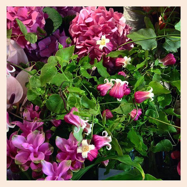 発色の良いピンク夏らしくて見てると元気が出ます️クレマチスとクルクマは暑さに比較的強いお花です