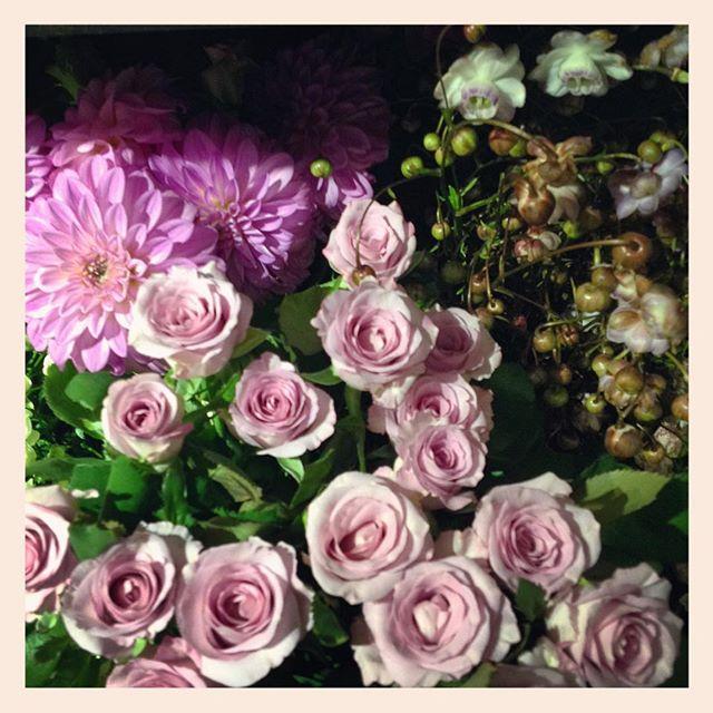 本日もたくさんお花が入荷しました。右上はコロンとした蕾がかわいい#レンゲショウマ