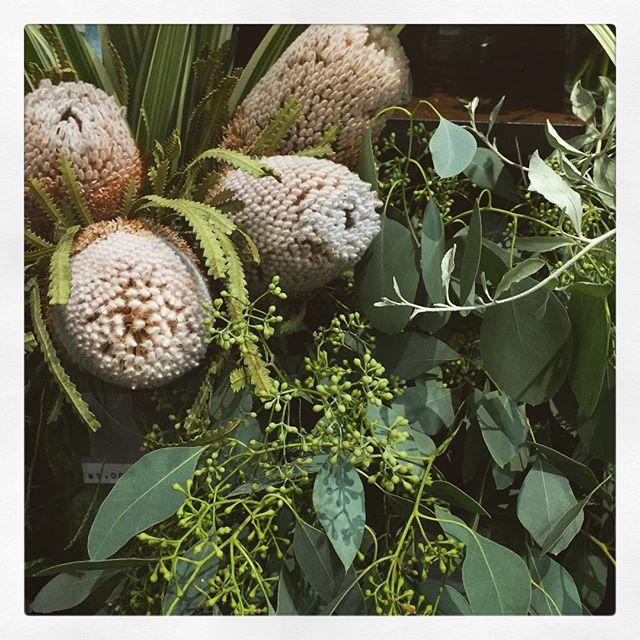バンクシアもユーカリと合わせると秋や冬らしくなります