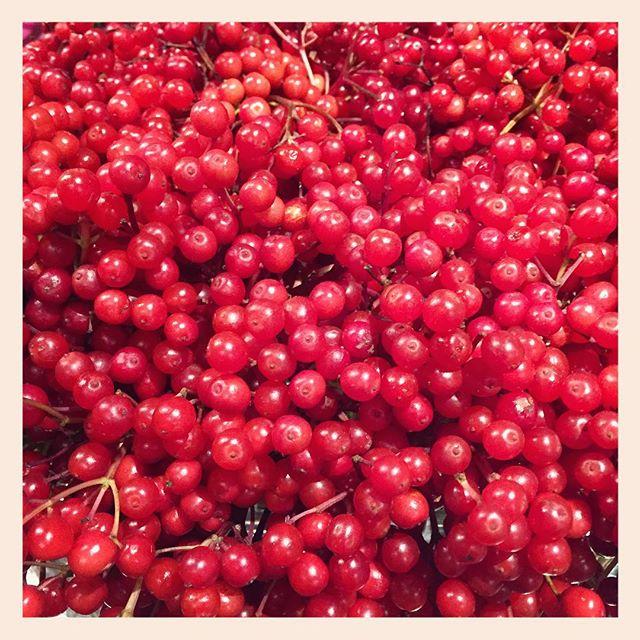 ビバーナムコンパクターキラキラとした赤い実が山盛り入荷しました。今が旬です
