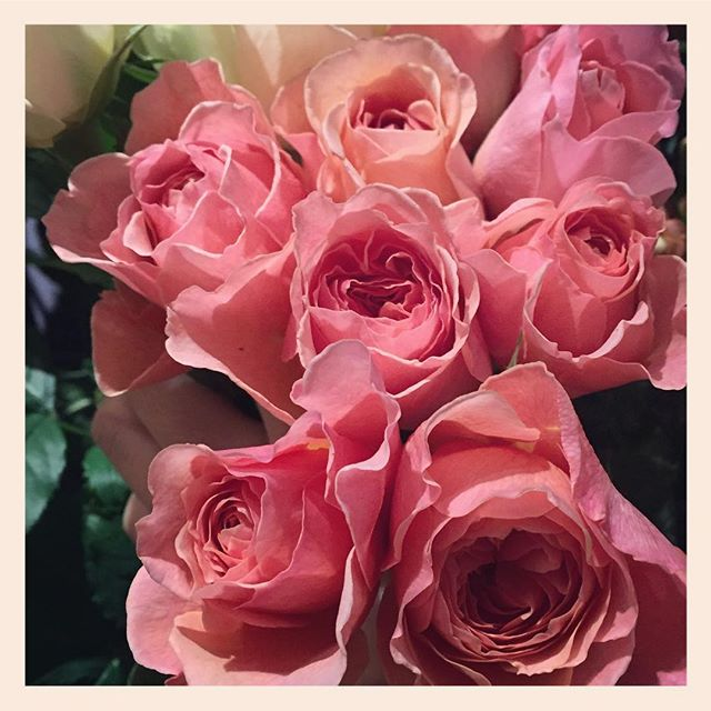 """""""かおりかざり""""香りがとても良く色味も繊細。とても素敵な和バラをつくっている、滋賀の國枝啓司さんのバラです#エトルファシネ"""