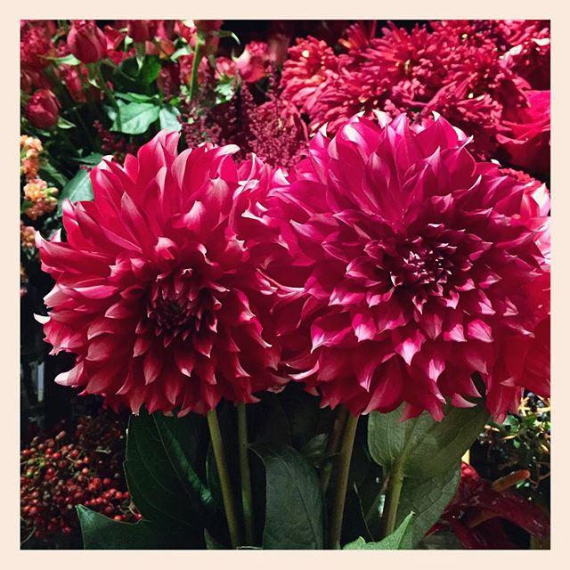 今日はお花の入荷日です。美しいダリアがたくさん入荷しております