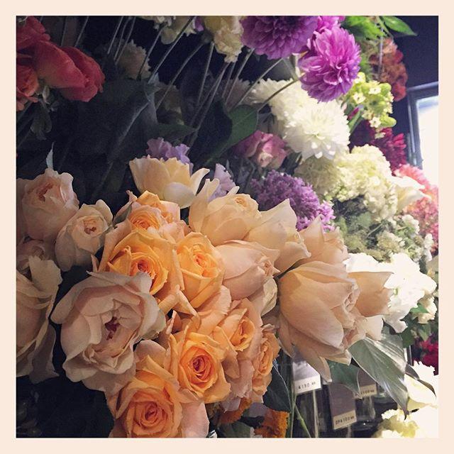 國枝啓司さんの#和バラ も多数並んでます柔らかい雰囲気のお花がお好きな方にはとってもおすすめです