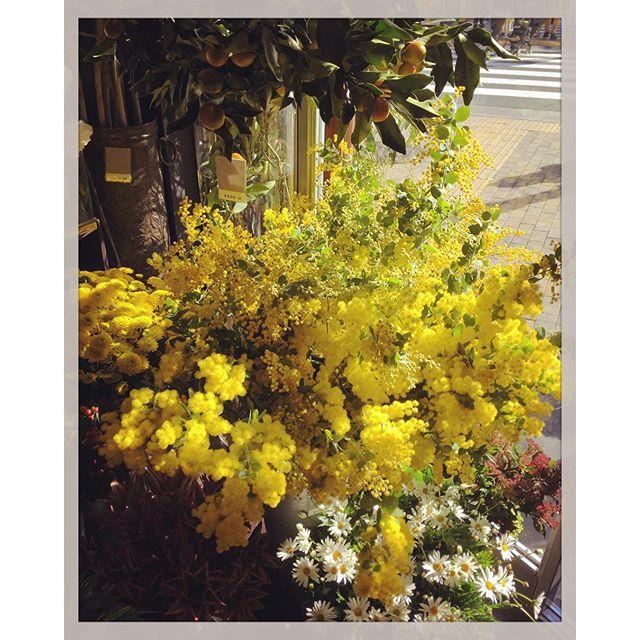 今日はお花の入荷日です#ミモザ