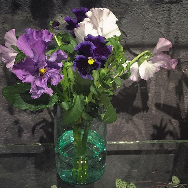 シックなパンジーのブーケと花器のセット¥1,500(税別)蕾まで咲きます#パンジー 2016.02.01