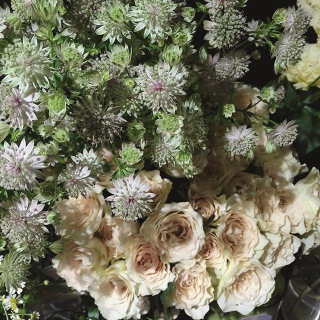 アストランティアとヤギバラ園さんの新品種のバラ。(名前はまだないそうす)香りが良く花もちも良さそうです今日も夏らしいお花がたくさん入荷しました