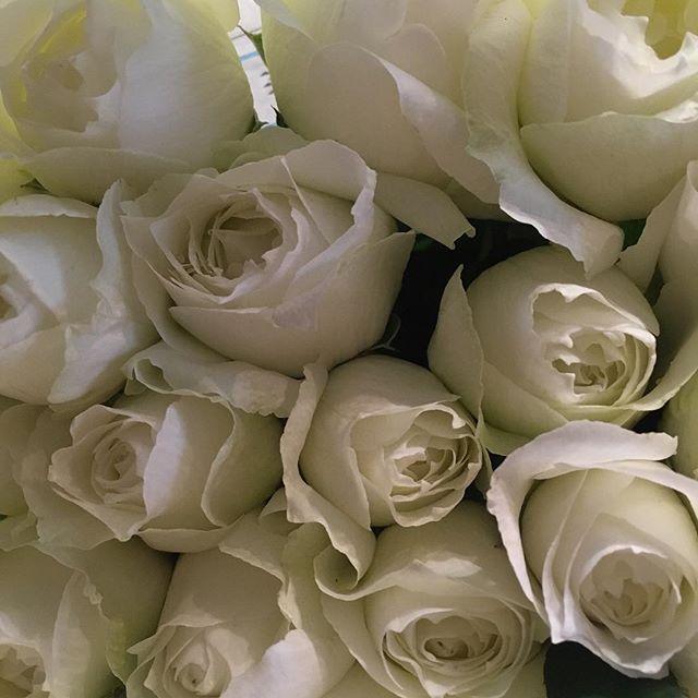 本日もたくさんのお花が入荷しております。悪天候の中お越しくださった方には、ささやかではございますが、バラやダリア等サービスでおつけさせて頂きます。ご来店お待ちしております!写真は、#ブルゴーニュ