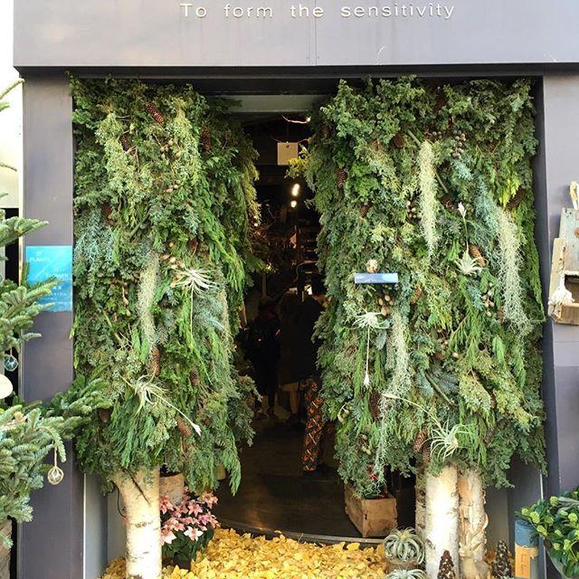 🌲入口には見たことのない木が二本🌲不思議な森へ…小さなトナカイと小さなフクロウがお出迎え今日はイチョウの落ち葉を敷いて、いつもと違った雰囲気です。リースやスワッグのオーダーもまだまだ承っておりますご来店お待ちしております!
