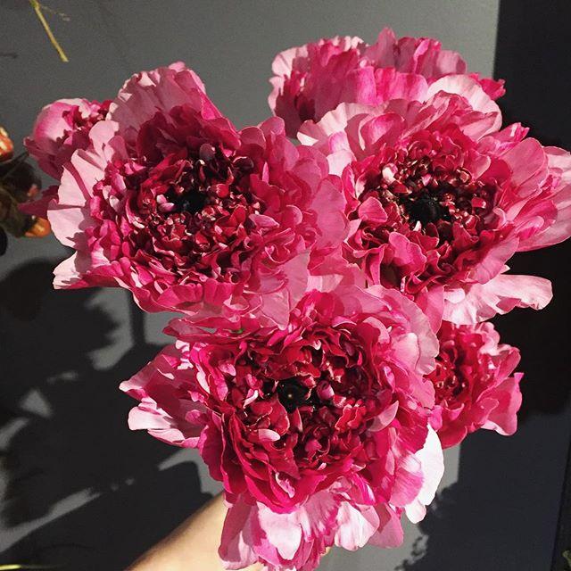 ラナンキュラス、シャルロット。ハッとするほど鮮やかな色。素晴らしく大きくて、一輪でも充分な存在感。なかなかお目にかかれない、シャルロットの中でもかなりの銘品です店内は春のお花に溢れています。ご来店お待ちしております