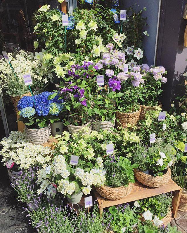母の日の贈り物、まだまだ承っております。ユニークな鉢花もたくさん入荷しています今のところ、ご配送も母の日当日に間に合います。(締め切ってしまう場合もございます)ご来店お待ちしております