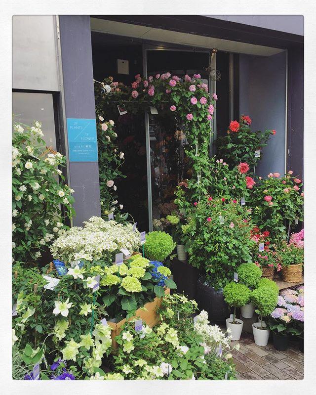 毎年スタッフも楽しみにしているバラのアーチ今日からたくさんのバラが店頭を彩ってくれています!本日は母の日のため、23時まで営業しております。 ご来店お待ちしております
