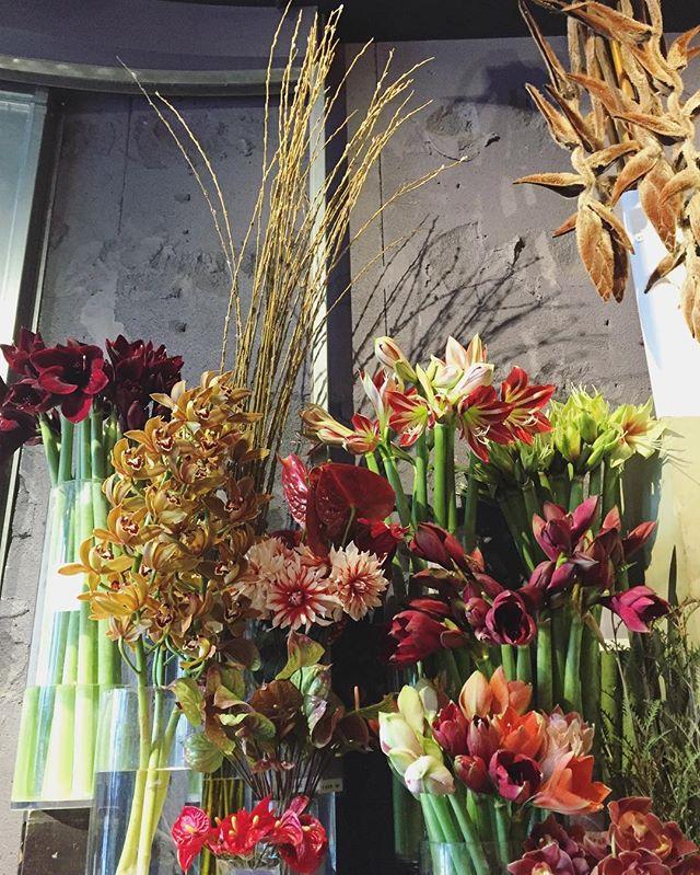 朝陽にあたればフレッシュな印象で、夜の光の中では艶美な印象のアマリリス。花もちもよく、一本だけでも素敵に飾れるお花です。たくさんの種類が並んでいます。今は通常より少しお手頃ですぜひご来店下さい