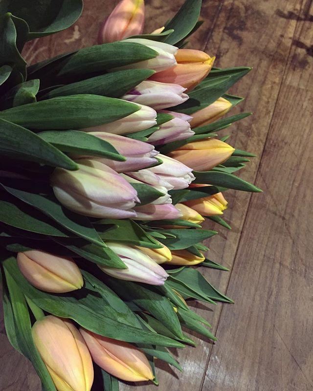今日はチューリップの束がおすすめです。つぼみの時はマットな質感でアンニュイな色合い。咲が進むと徐々に膨らみ、ツヤっぽくなり、色もはっきりしてきます。光に反応し、茎がのび、花部は開いたり閉じたりを繰り返します。写真の2種類を、それぞれ10本ずつの束で販売しております本日も21時半までの営業です。ご来店お待ちしております