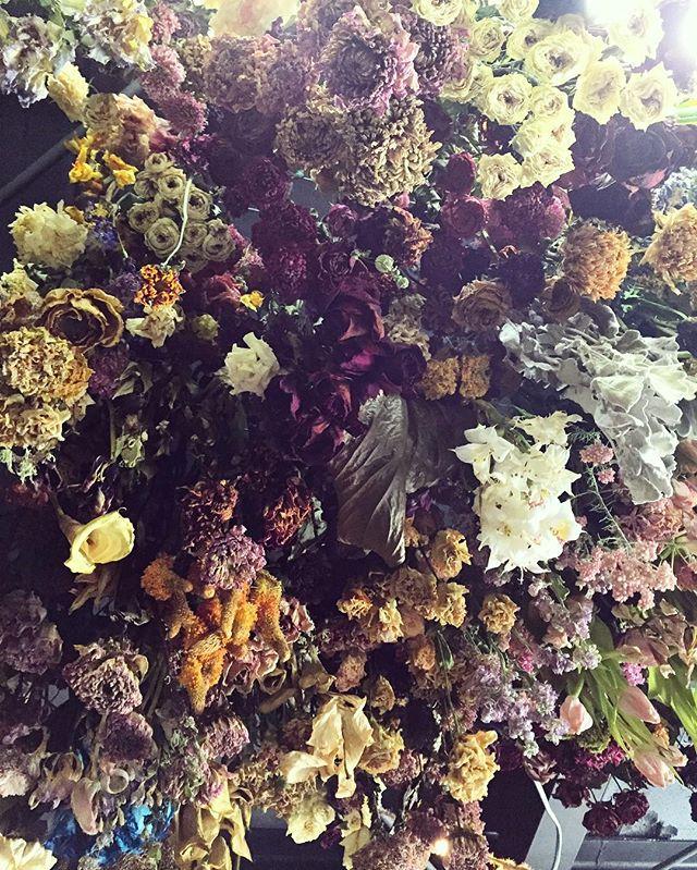 販売しているドライフラワーは全てお店の三階で作っています。(写真は三階の天井です)生花で販売しているものをそのままドライフラワーにしているので、バラなどの中に少し変わった植物がたくさん混じっています。乾燥させることで変化する色、植物の形状、生花にはない趣を楽しんでもらえたらと思います。昨日たくさん店頭に並べました。生花も春のお花がたくさんです。ご来店お待ちしております
