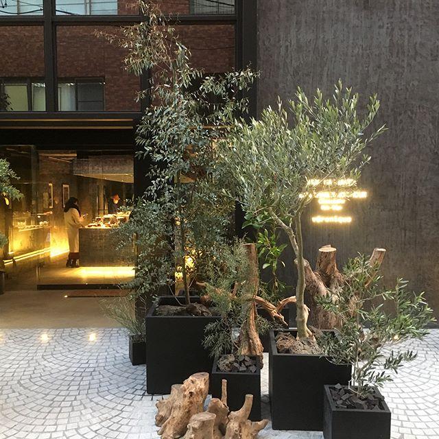 パリのショコラティエ、JEAN-CHARLES ROCHOUX などの入った南青山骨董通り裏手に出来たNOIR。こちらの建物のエントランス、裏庭など植栽や装飾をさせて頂きました。店内には一面ガラス張りのスペースがあり、樹海をイメージとした空間をご覧頂けます。