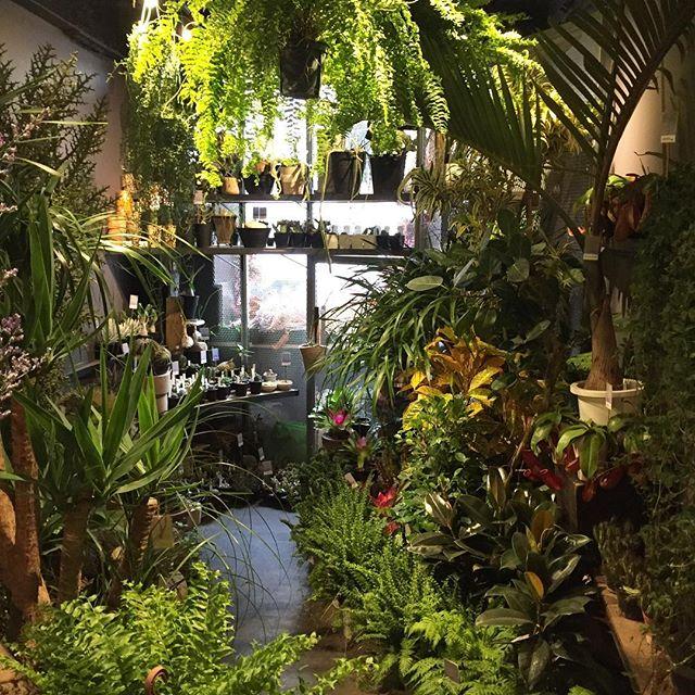 先日行われたインドアプランツコンテストに出品された植物達がたくさん入荷しました全国から選りすぐりの植物達が集まるコンテストなので、とても品質の良い植物達が入荷しておりますご来店の際は是非2階もご覧下さい
