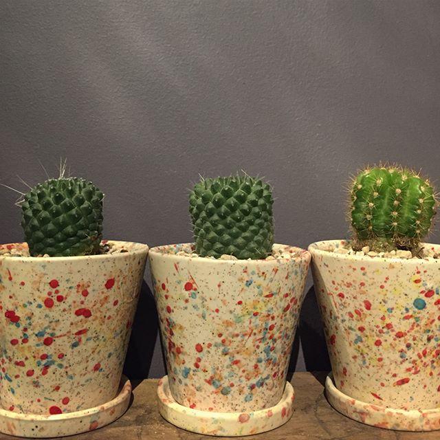 鉢、色んなサイズや形のもの入荷しております少し高さを出して飾るのに便利な鉢用のスタンドも、写真のアイアン素材や木製のもの、サイズも何種類か入荷致しました。探していたものや気にいるものが見つかるかもしれません。当店2階に並んでおります。店頭にないものでもお探しのサイズや色のものも、ご相談の上注文を承ることも可能です。ご来店お待ちしております本日は23時までの営業です。