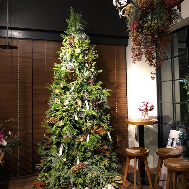 クリスマスのデコレーション。花王ソフィーナ様のプロモーションイベントでの装飾を担当させて頂きました。3mほどのツリーは8種類の植物でつくりました。リースやスワッグなどのオーダーもまだまだ承っております。