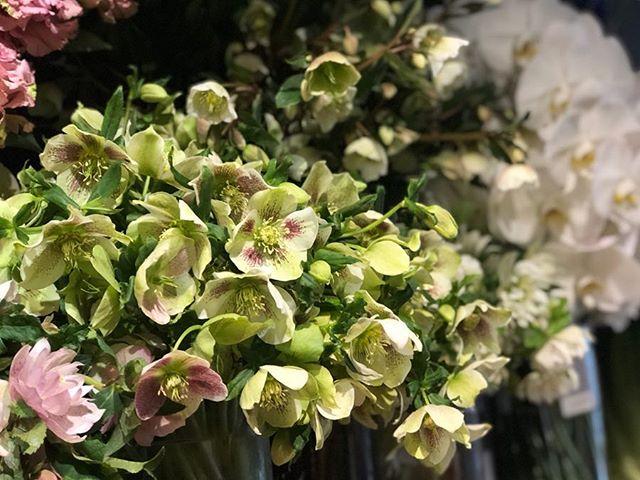 少しうつむいた花姿が素敵な、クリスマスローズたくさんの種類入荷してます。クリスマスローズとグリーンのブーケと花瓶のセットも#sorcerydressing #ソーセリードレッシング #Helleborus #クリスマスローズ