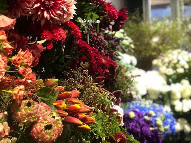 生花も通常通りに。毎年、冬の終わりから春にかけてお店の入り口を彩ってくれるハーデンベルギアも入荷しました。今年もどうぞよろしくお願い致します