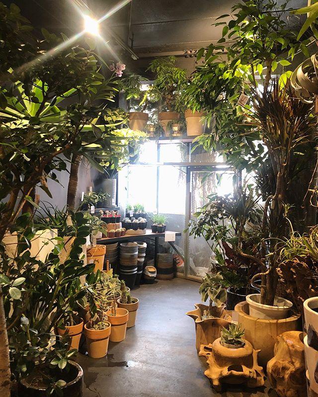 2Fは観葉植物やドライフラワー、流木や木製の器などが並んだ1Fとはひと味違う不思議な空間です。少しリニューアルしました。ぜひ覗きにいらしてください#SORCERYDRESSING #ソーセリードレッシング