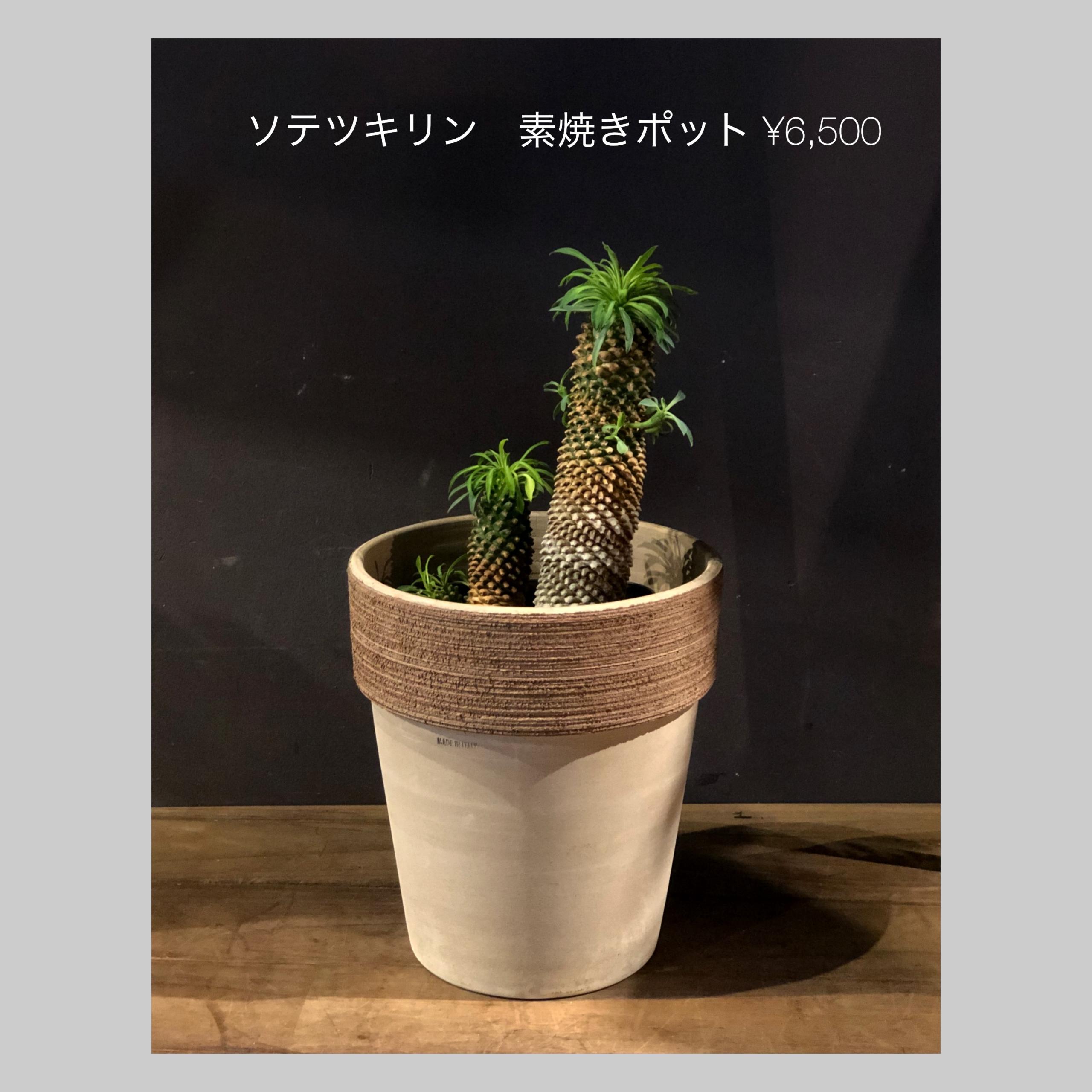 green0002-sotetsukirin